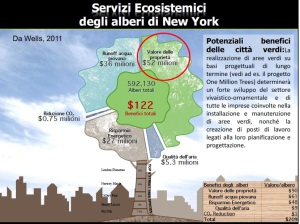 servizi ecosistemici alberi NY